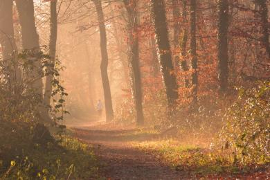 Półmaraton po leśnych ścieżkach po raz drugi w Żorach! Trwają zapisy