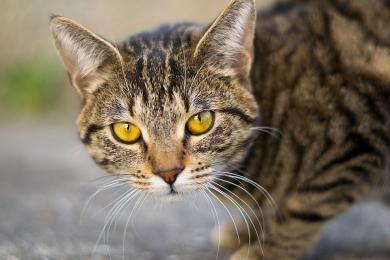 Trwa akcja sterylizacji i kastracji kotów wolnożyjących