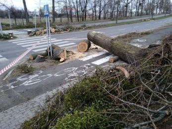 Porywisty wiatr w Żorach – zobacz szkody i zniszczenia