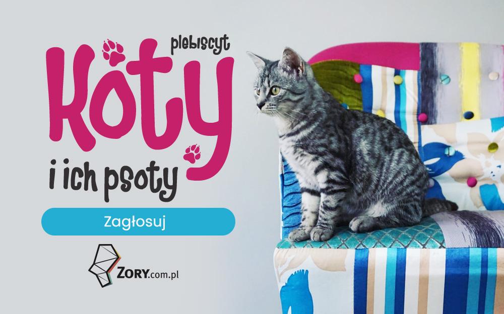 Koty i ich psoty - zagłosuj w plebiscycie na najfajniejszego kota Żor