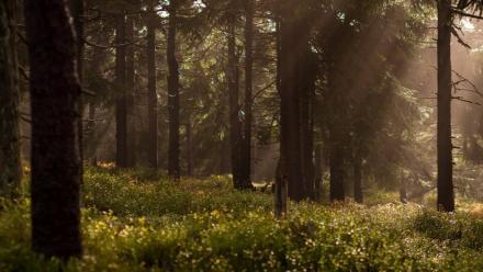 Nabor wniosków o dofinansowanie dla właścicieli lasów prywatnych