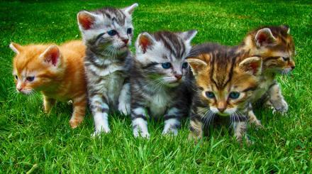 Odbierz karmę i dokarm wolno żyjące koty