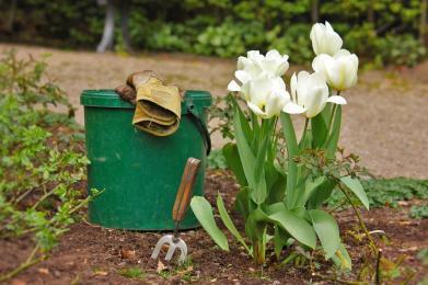 Zadbaj o swój ogródek działkowy