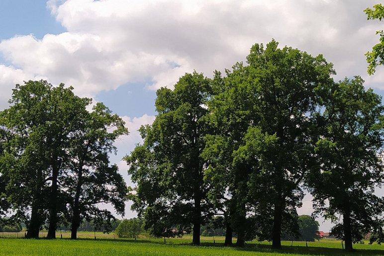 """Konkurs dla dzieci i młodzieży """"Najpiękniejsze drzewo w Żorach"""""""
